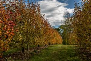 botzi_automne-5280