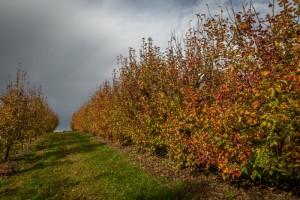 botzi_automne-5310