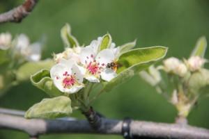 botzis printemps 2011 012