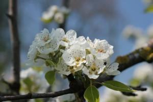 botzis printemps 2011 025