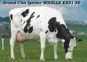 nouille_2013